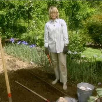 How to Plant Gladioli In Prepared Soil