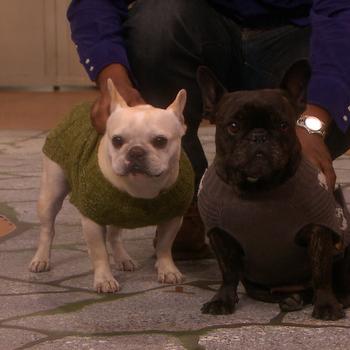 Martha Stewart Hosts a Dog Fashion Show