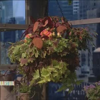 How to Repot a Plant in a Hanging Basket
