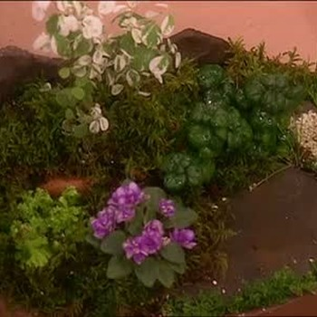 Miniature Gardens With Olive Ma-Robinson