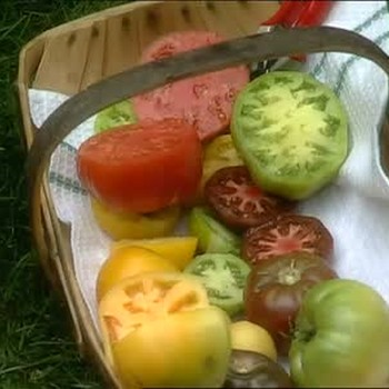 The Different Types of Heirloom Tomatoes