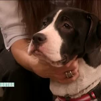 Pet Adoption Information with Dr. Pia Salk