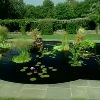Aquatic Gardens in Wave Hill Public Garden