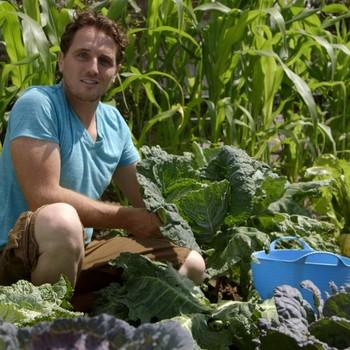 Harvesting Cauliflower, Broccoli, and Cabbage