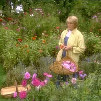 Picking Flowers From A Cutting Flower Garden