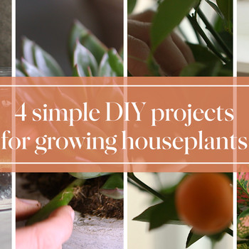 4 Simple DIY Projects for Growing Houseplants