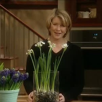How to Force Paper Whites With Margaret Roach