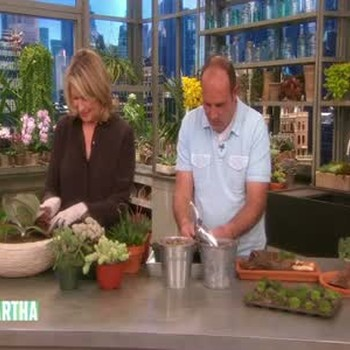 How to Plant and Grow Hearty Succulent Plants