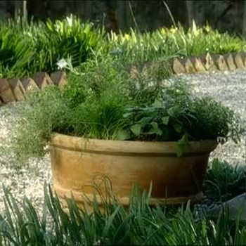 Herb Pots Used for Quick Access to Fresh Herbs