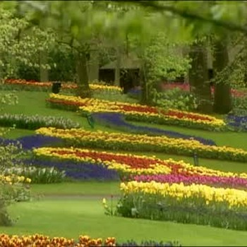 Visit to the Keukenhof Park in the Netherlands