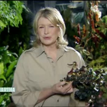 Cutting Edge Flowers and Plants for Your Garden