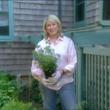 Using Plants to Hide Unattractive Installations