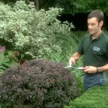 Keeping Plants Healthy and Lush With Maintenance