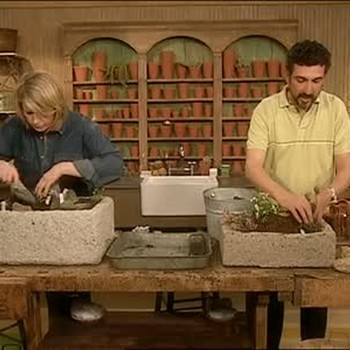 Planting Alpine And Rock Garden Plants In Troughs
