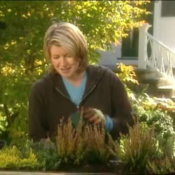 How To Plant a Window Box with Heaths and Heathers