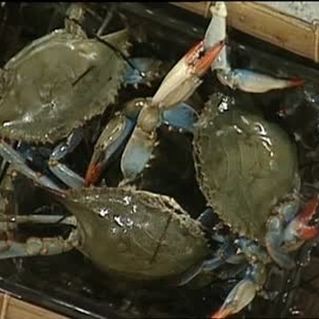 New Orleans Style Boiled Blue Crabs With Spices P1