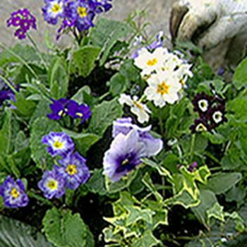 Planting Spring Urns