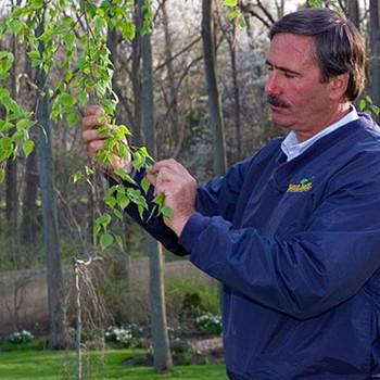 Professional Tree Help