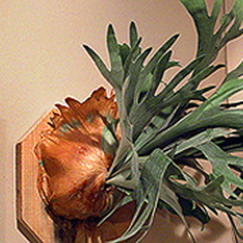 Staghorn Ferns with Francisca