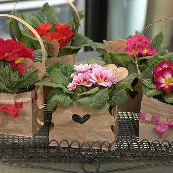 Valentine's Day Plant Gift