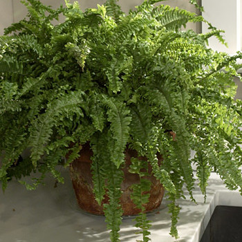 Air-Purifying Houseplants with Mobee