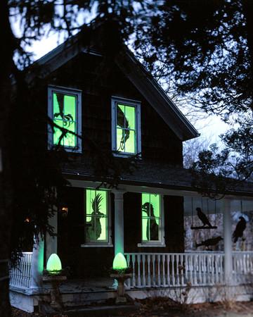 Spooky Birds in Windows