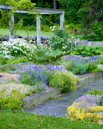 Flowering Herbs
