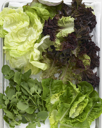 Mesclun and Lettuces