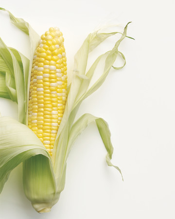 Corn Basics