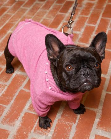 Wool Cardigan Dog Coat