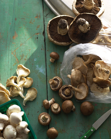 Mushroom Basics