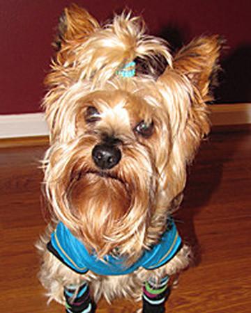 Pup Rocker