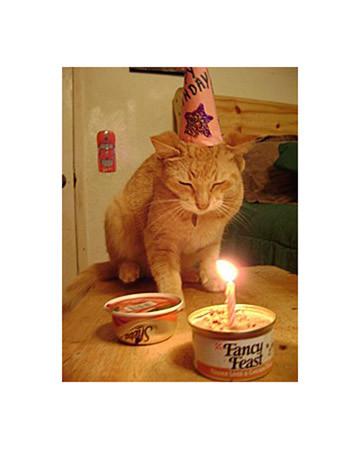 Pig's 11th Birthday