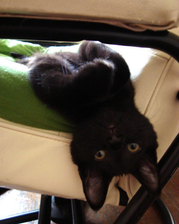 Penne Pretending to Be a Bat