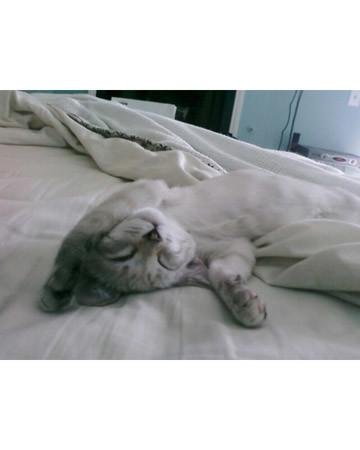Sleeping in till Noon!