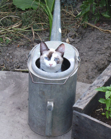 Kitty in the Can