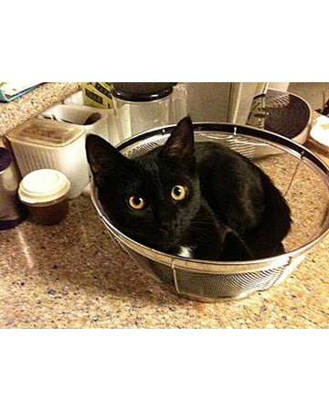 Max in the Strainer