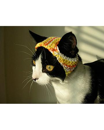 Winston's Sunrise Hat!