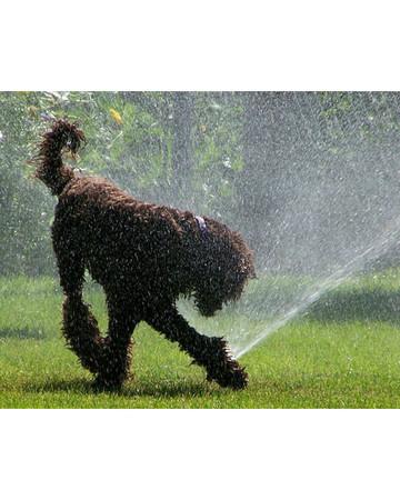 Stop the Sprinkler!