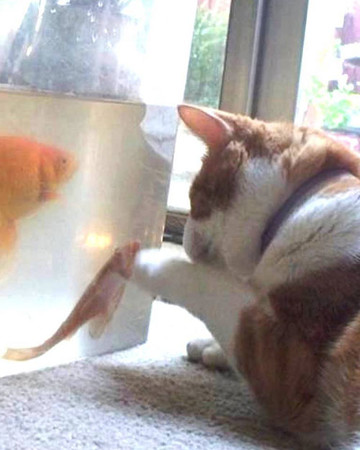 Playing with the Fishies