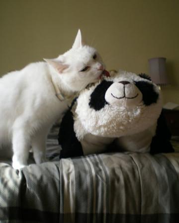 Mako Cleans Mr. Panda
