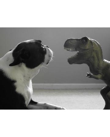 Violet vs. Dino
