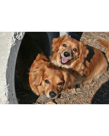 Crawling Through the Dog Tubes