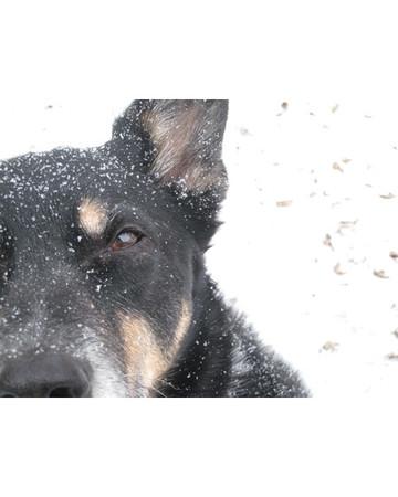 Owen in the Snow!