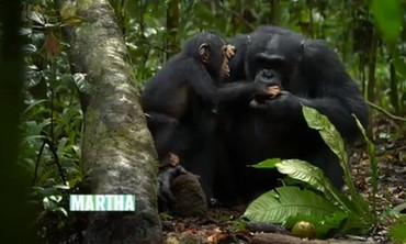 "The Making of the ""Chimpanzees"" Movie"