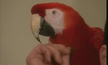 Birds Behaviors