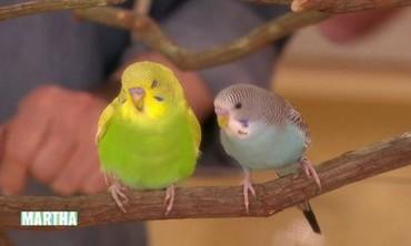 Parakeets 101