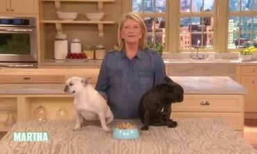 Petkeeping Tips