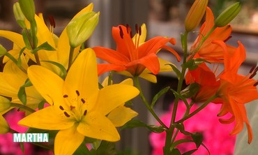 Seasonal Lilies