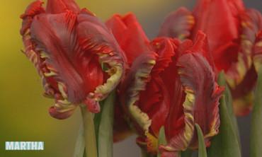 Spring Arrangement, 1